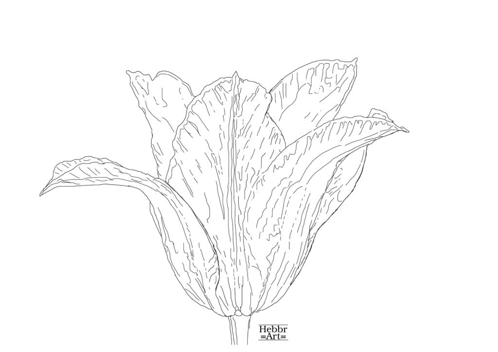 Lijntekening tulp