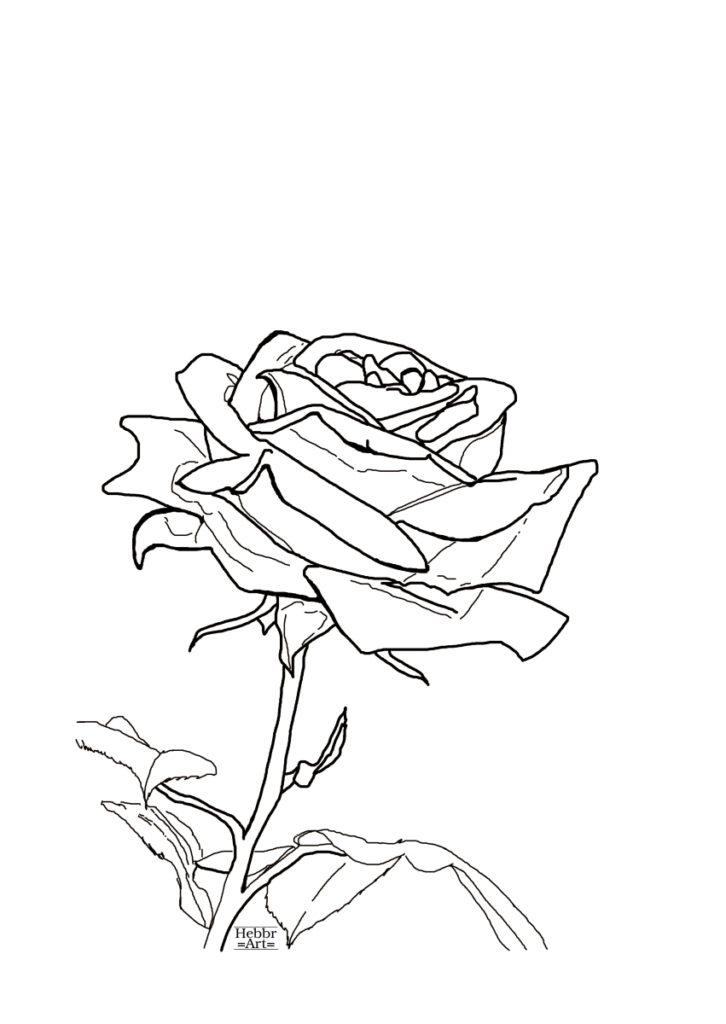 Lijntekening roos